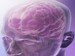 Brain Power: Developing Executive and Memory Functions